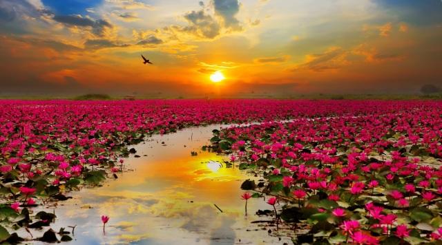 2612328-lotus-flowers-desktop-high-resolution-wallpapers