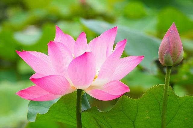 botanical-garden-2844202_960_720